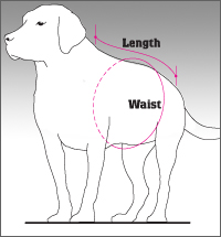 How and where to measure your dog.