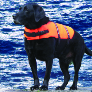 Life Jackets / Buoyancy Aids