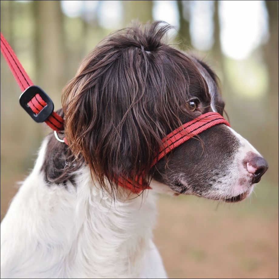 Gencon 'All-in-1' Clip-to-collar Training Leads